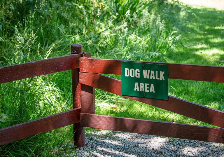 dog walk area
